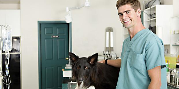Vétérinaire souriant soignant un chien