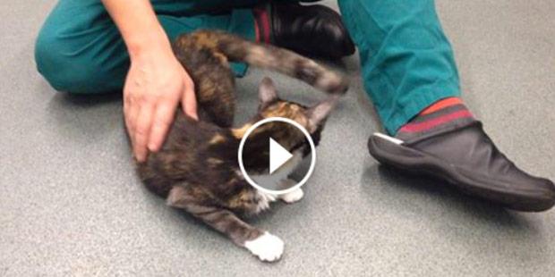 chat atteint d'une carence en thiamine