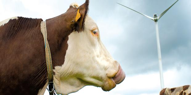 Une vache dans un champ près d'une éolienne