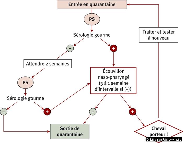 Figure 2: Procédure de quarantaine pour la gourme équine avec l'utilisation de la sérologie