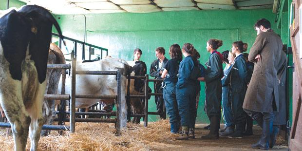 Etudiants vétérinaires dans une étable