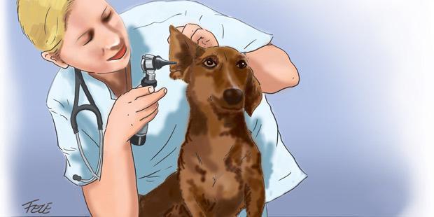 vétérinaire qui ausculte les oreilles d'un chien