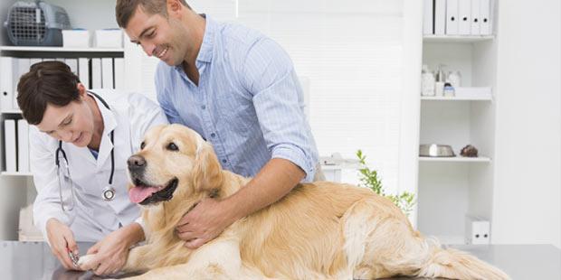 Cabinet vétérinaire et salarié