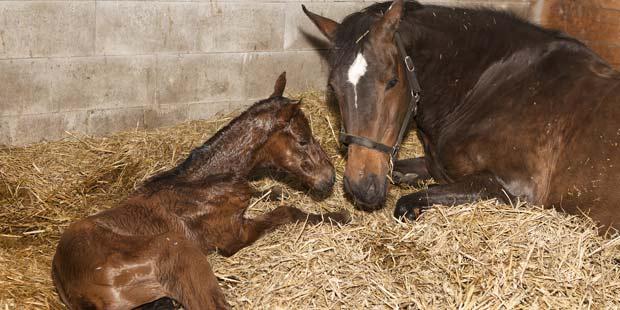 Jument et nouveau-né