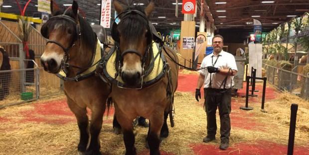 Hubert Vin et ses chevaux ardennais