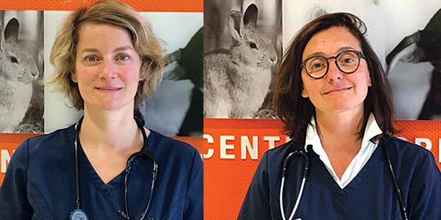 Hélène Kolb (à gauche) et Isabelle Testault, praticiennes au centre hospitalier vétérinaire Atlantia à Nantes (Loire-Atlantique).