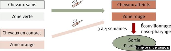 Figure 1: Circulation des chevaux au sein d'un foyer de gourme