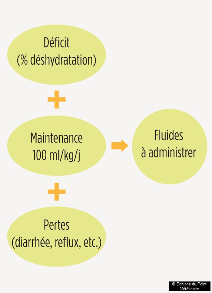 Comment réaliser une fluidothérapie chez un poulain?