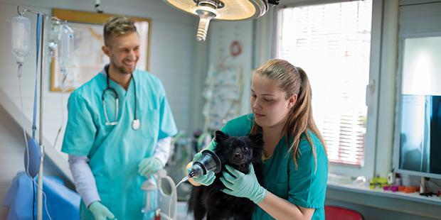 Une jeune vétérinaire auscultant un chien