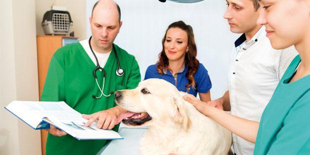 Equipe dans une TPE vétérinaire