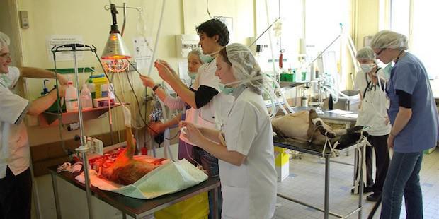 Clinique vétérianire; salle d'opération et salariés