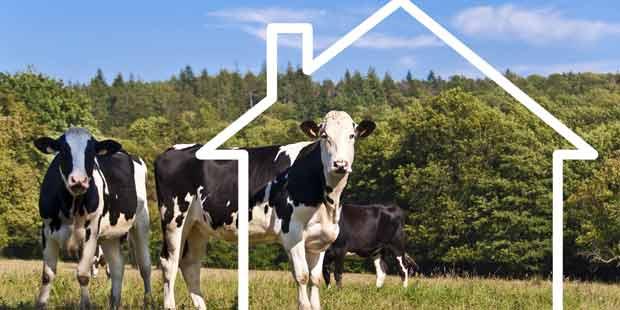 silhouette de maison sur un troupeau de vaches