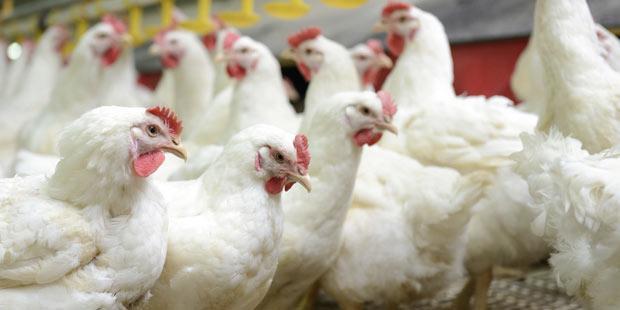L'Europe lutte contre les maladies animales