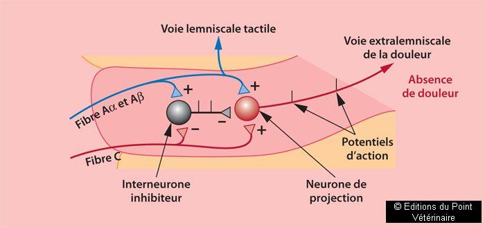 FIGURES 2Représentation des contrôles segmentaires: théorie du gate control