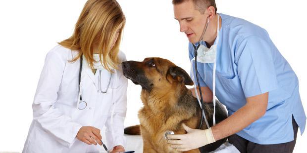 Employeur et salarié vétérinaire