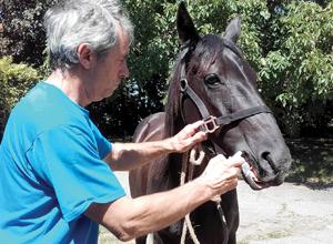 Bilan des effets indésirables déclarés chez le cheval