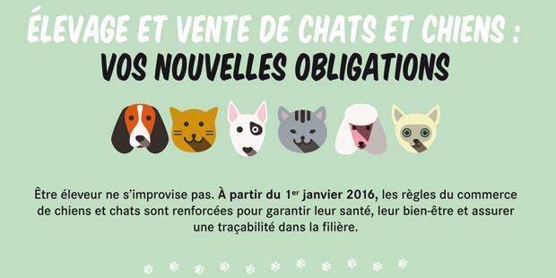 affiche nouvelle réglementation vente chiens et chats