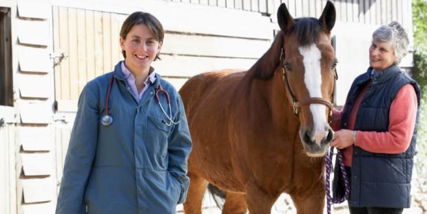 Consultation vétérinaire équine