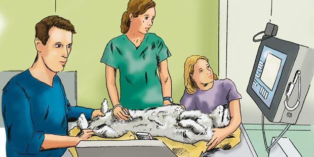 Dessin : échographie d'un chien