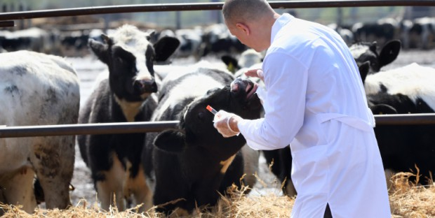 visite veterinaire en élevage bovin