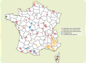Localisation des élevages infectés par E. granulosus sensu lato