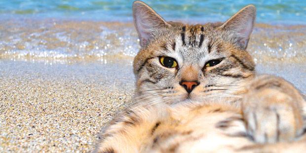Un chat allongé sur une plage