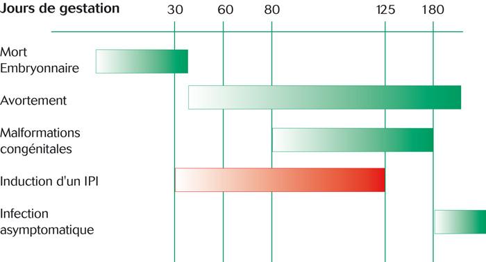 Les effets de l'infection transplacentaire par le virus BVD-MD selon le stade de gestation