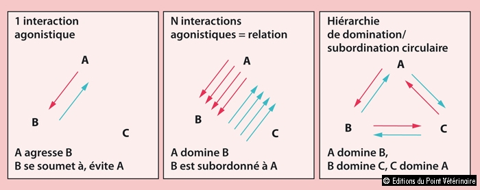 FIGURE 1Interaction agonistique, relation de dominance/subordination et hiérarchie de dominance/subordination
