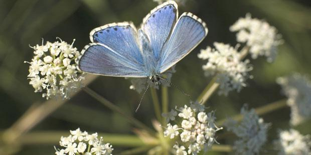 papillon et biodiversité