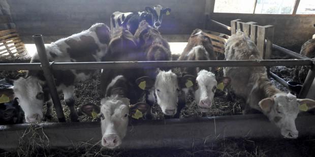 Loi de santé animale approuvée par le parlement européen