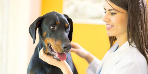 Jeune vétérinaire femme
