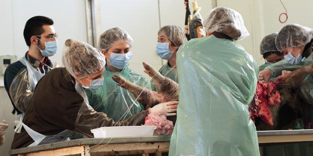 Etudiants vétérinaires