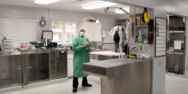 Vétérinaire en préchirurgie