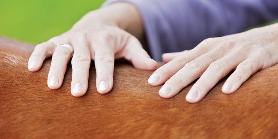 les mains d'un ostéophate sur le dos d'un cheval