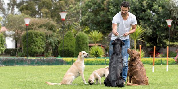 Des chiens avec leur maître dans un parc