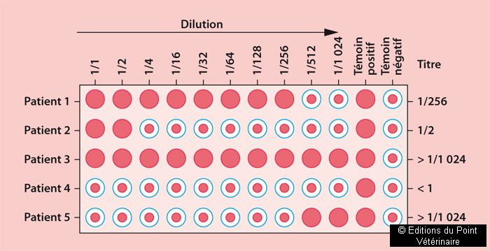 FIGURE 2Test de Coombs avec dilutions successives