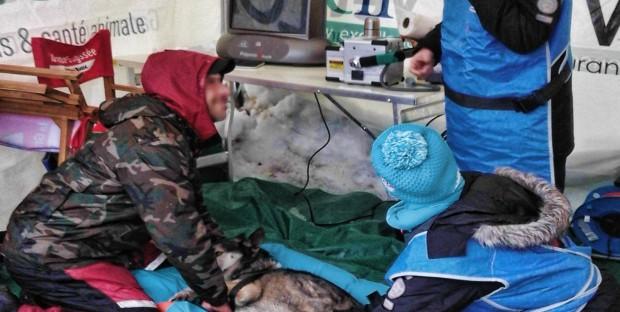 Team vétérinaire La Grande Odyssée Savoie Mont-Blanc