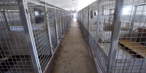 cages refuge chien