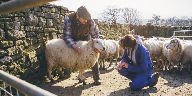 Un éleveur montre un de ses moutons à son vétérinaire