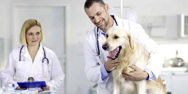 Consultation dans un cabinet de vétérinaires