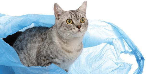 certains sons comme le bruit d'un sac en plastique peuven tinduire un syndrome épileptique chez des chats