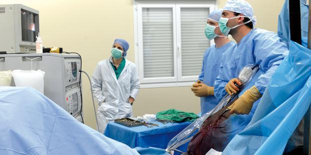 Chirurgie équine