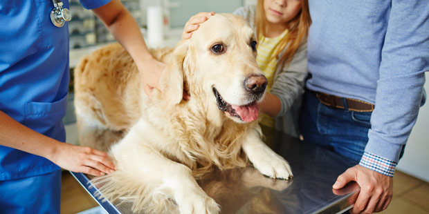 assurance santé animale