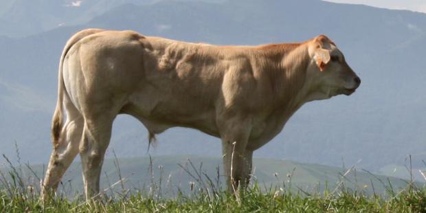 les vétérinaires vont être mandatés pour certifier les échanges d'animaux vivant.