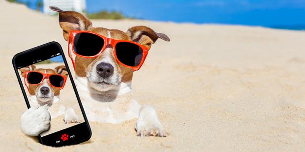 Un chien en vacance sur le sable