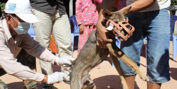 Vaccination contre la rage au Cambodge