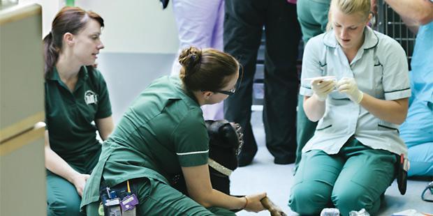 Des nurses vétérinaires  britanniques