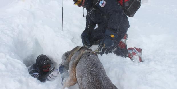formation des maitres de chiens d u0026 39 avalanches de la