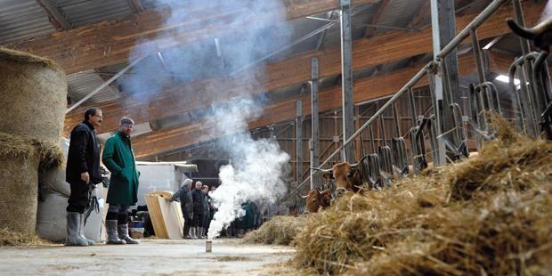 Affections respiratoires chez les bovins