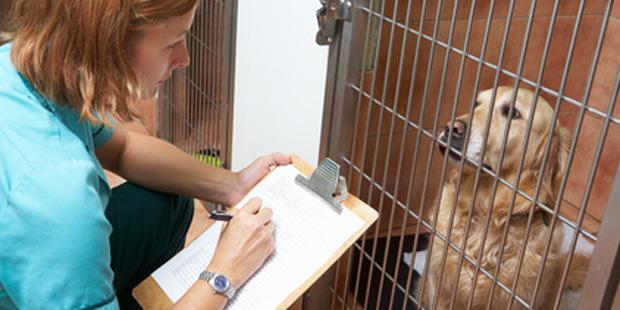 Reprise de petite structure vétérianire